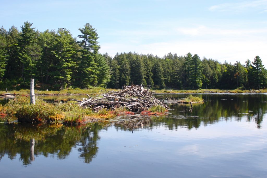 Backcountry Camping in Ontario - Killarney Provincial Park
