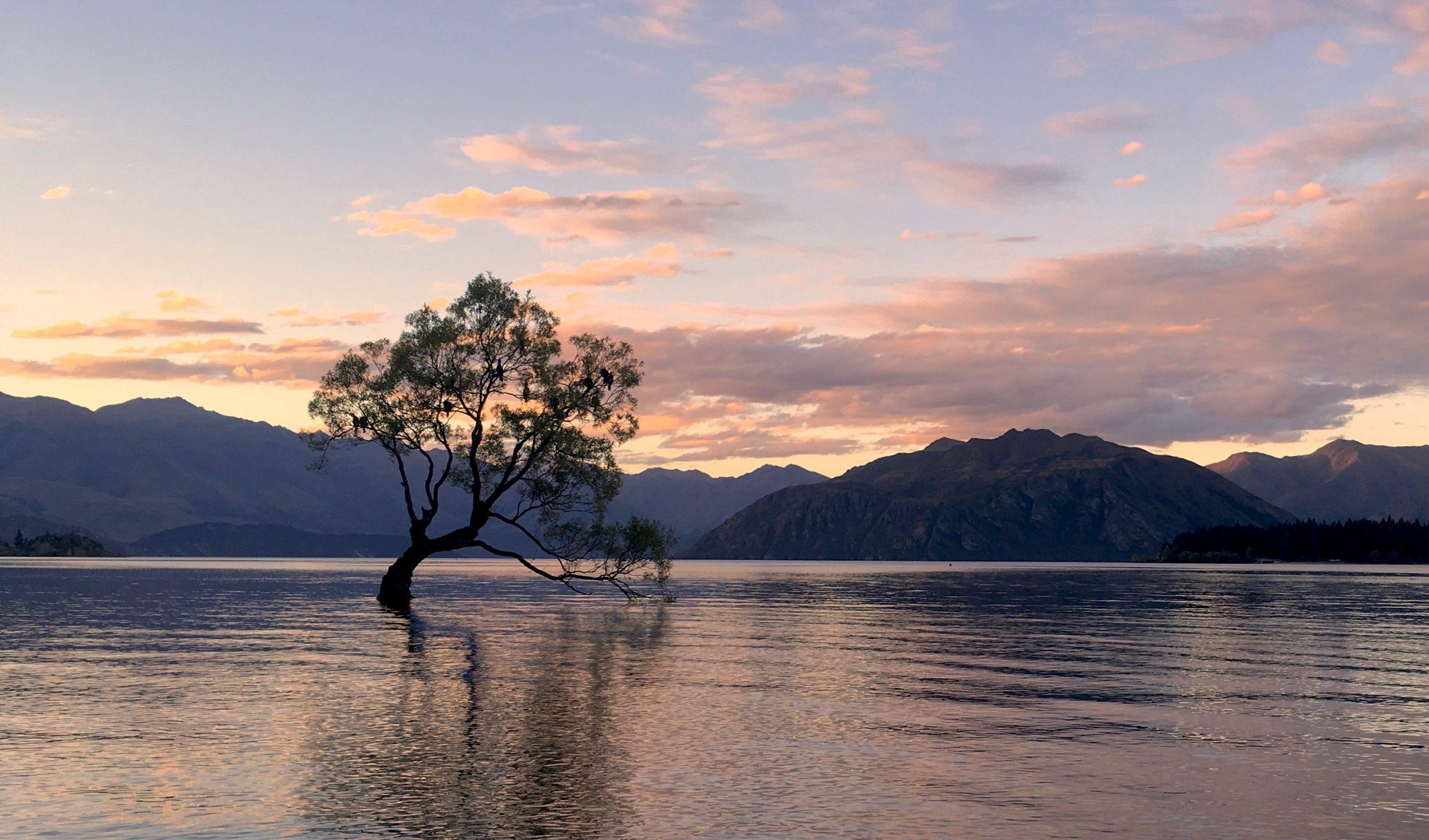 That Wanaka Tree - Things to do in Wanaka